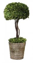 Uttermost 60095 - Uttermost Tree Topiary Preserved Boxwood